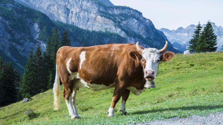 L'équilibre physiologique de vos animaux avec Oligoéléments, dès l'été il faut y penser!